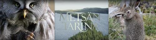 photo from METSÄN TARINA